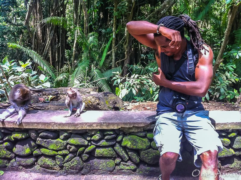 Sacred Monkey Forest Rasta