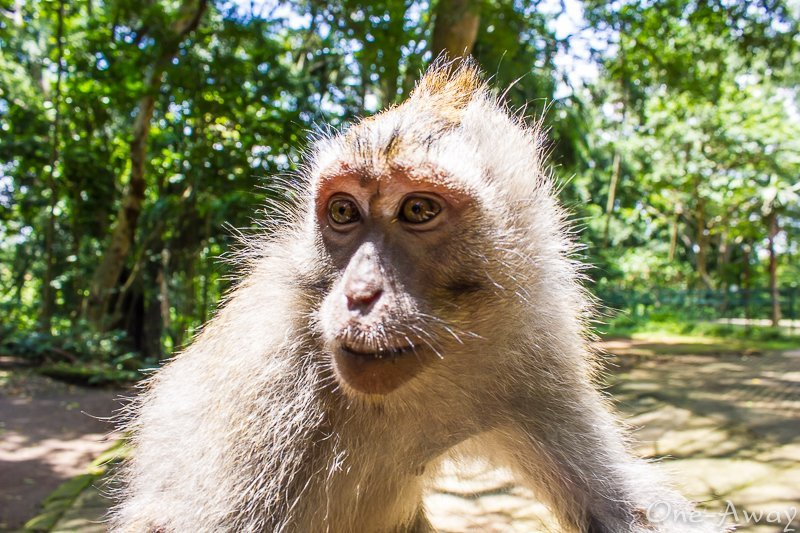 Sacred Monkey Forest Sanctuary – Ubud