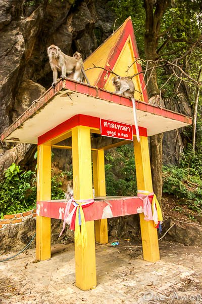 Monkeys at Tiger Cave Temple Krabi Thailand